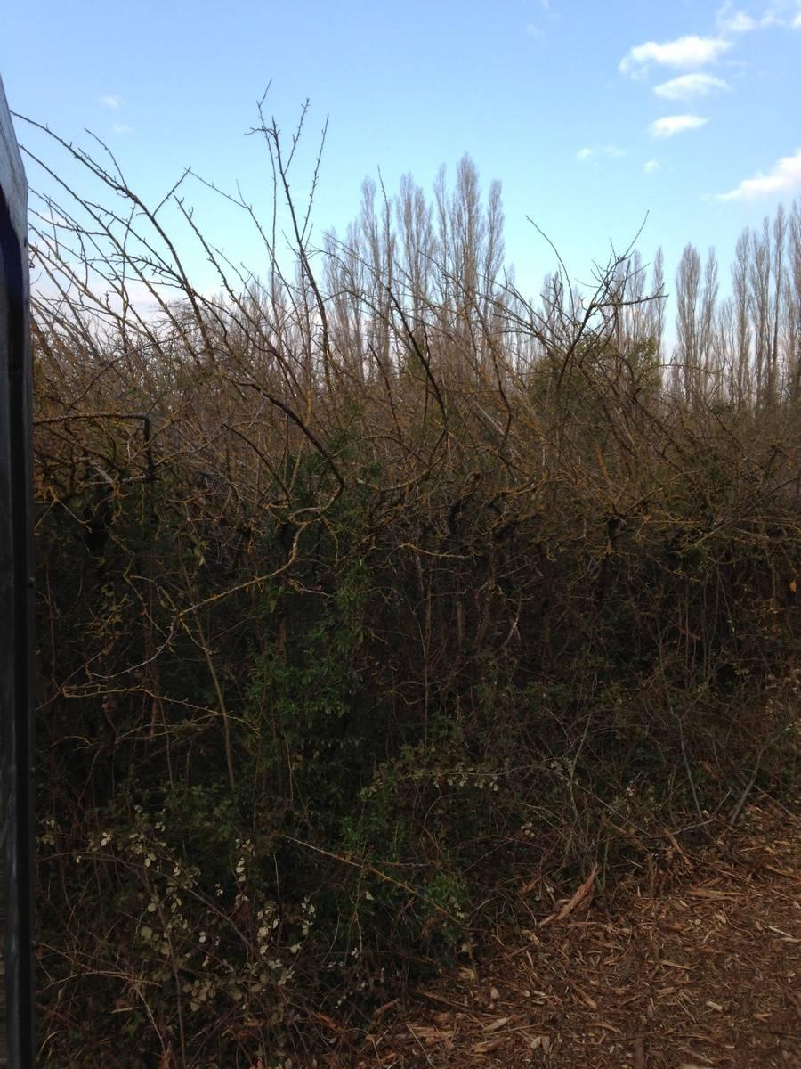 Aménagement paysager à Salon de Provence - Maurel TP - Aménagement extérieur et débroussaillage dans les Bouches-du-Rhône.
